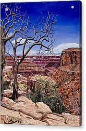 Bare Limbs Acrylic Print by Timithy L Gordon