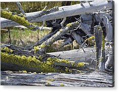 Bare Logs And Lichen In Yellowstone Acrylic Print by Bruce Gourley