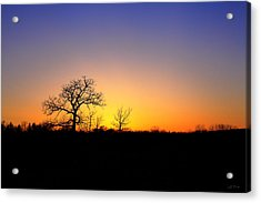 Bare Oak In Spring Sunset Acrylic Print