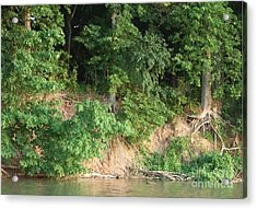 Acrylic Print featuring the photograph Bare Roots by Deborah DeLaBarre