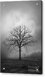 Bare Tree And Clouds Bw Acrylic Print