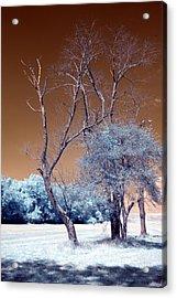 Bare Tree Cahokia Acrylic Print by Bob Pomeroy