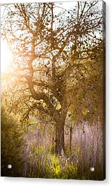 Bare Tree Acrylic Print by Mike Lee
