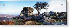 Bare Tree Near Rocks, Haytor Rocks Acrylic Print by Panoramic Images