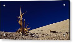 Bare Tree On A Landscape, Usa Acrylic Print by Panoramic Images