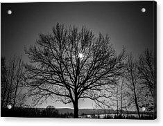Bare Tree Acrylic Print by Wladimir Bulgar