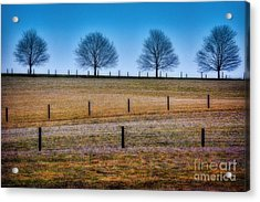 Bare Trees And Fence Posts Acrylic Print