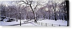 Bare Trees During Winter In A Park Acrylic Print by Panoramic Images