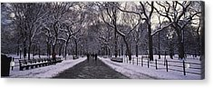 Bare Trees In A Park, Central Park, New Acrylic Print by Panoramic Images
