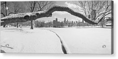 Bare Trees In A Park, Lincoln Park Acrylic Print by Panoramic Images