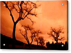 Bare Trees Acrylic Print by Mark Alan Perry