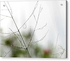 Acrylic Print featuring the photograph Barest Branches by Kimberly Mackowski