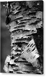 Bark Acrylic Print by Brady D Hebert