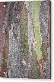 Bark Of Tree, San Juan Acrylic Print by Jean Marie Maggi