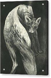Bark Acrylic Print by Rebecca Bourke