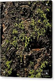 Bark Acrylic Print by Rebecca Christine Cardenas