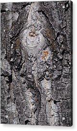 Bark Acrylic Print by Sheila Byers