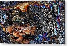 Barkbird Acrylic Print