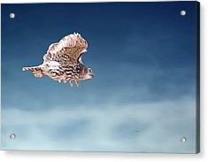 Barking Owl In Flight Acrylic Print
