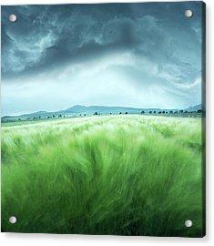 Barley Field Acrylic Print by Floriana Barbu