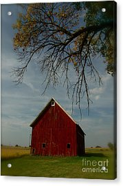 Barn And Box Elder Acrylic Print by Tim Good