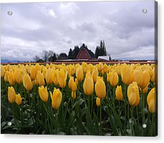 Barn And Yellow Tulips Acrylic Print by Karen Molenaar Terrell