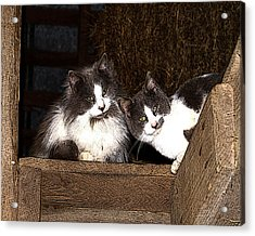Barn Cats Acrylic Print by TnBackroadsPhotos