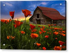 Barn In Poppies Acrylic Print by Debra and Dave Vanderlaan
