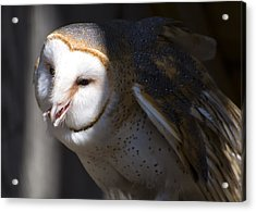 Barn Owl 1 Acrylic Print by Chris Flees