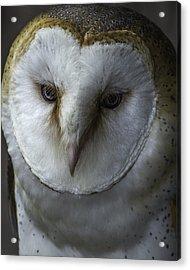 Barn Owl 2014-001 Acrylic Print