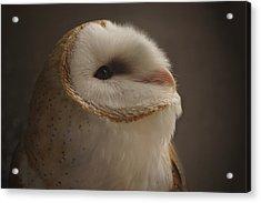Barn Owl 4 Acrylic Print