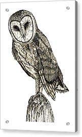 Barn Owl Acrylic Print by David Blank