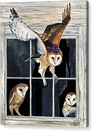 Barn Owl Family Acrylic Print by Suzanne Schaefer
