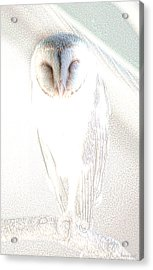Acrylic Print featuring the photograph Barn Owl by Holly Kempe
