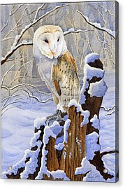 Barn Owl In Snow Acrylic Print by Anthony Forster