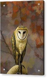 Barn Owl Acrylic Print