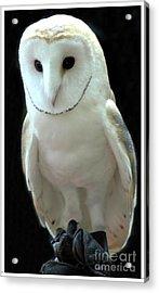 Barn Owl. Acrylic Print by Kathleen Struckle