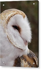 Barn Owl Profile Acrylic Print by Theo