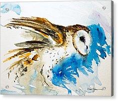 Da145 Barn Owl Ruffled Daniel Adams Acrylic Print