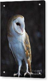 Barn Owl Acrylic Print by Sharon Elliott