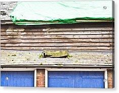 Barn Repairs Acrylic Print by Tom Gowanlock