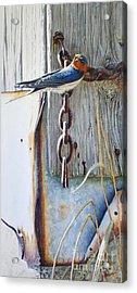 Barn Swallow Acrylic Print by Greg and Linda Halom