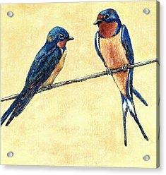 Barn-swallow Pair Acrylic Print