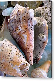 Barnacles Acrylic Print by Colleen Kammerer