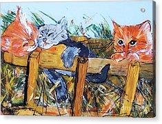 Barncats Acrylic Print