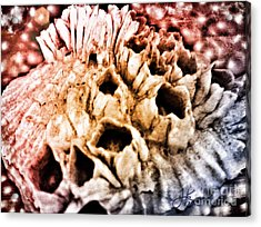 Barnicles On Oyster Shell 20150210 Acrylic Print by Julie Knapp