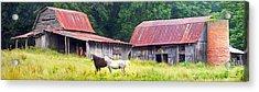 Barns And Horses Near Mills River Nc Acrylic Print