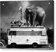 Barnum And Bailey Goes On A Road Trip 5d22705 Black And White Acrylic Print by Wingsdomain Art and Photography