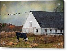 Barnyard Bliss Acrylic Print