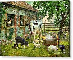Barnyard Chatter Acrylic Print by Trudi Simmonds